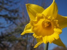 Ayurveda for Spring